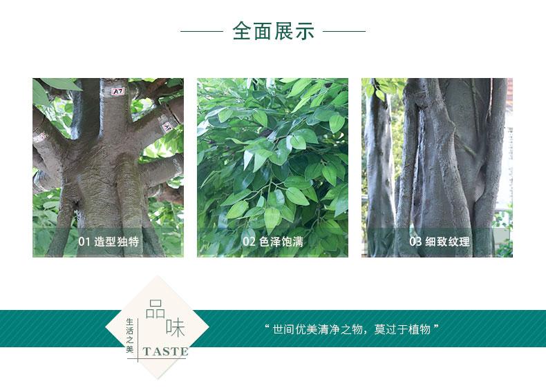榕樹詳情頁_02.jpg