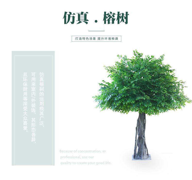 榕樹詳情頁_01.jpg